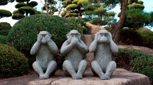 abpo_3 monkeys